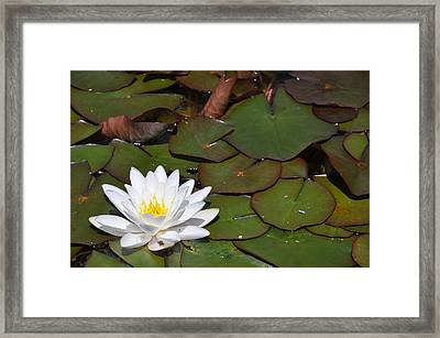 Brilliantly Bright Framed Print by Greg McDonald
