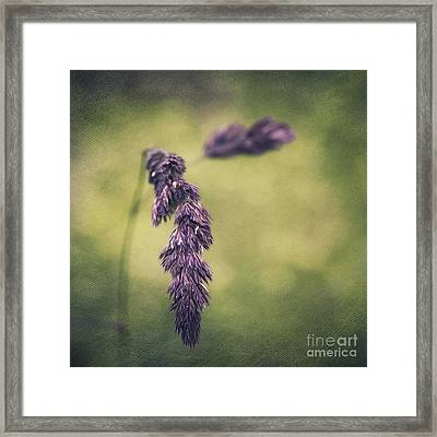 Brin D'herbe Framed Print