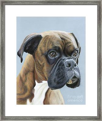 Framed Print featuring the painting Brindle Boxer Dog - Jack by Donna Mulley