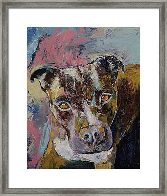 Brindle Bully Framed Print by Michael Creese