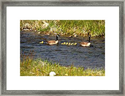 Bringing Up The Rear Framed Print by Adam Jewell