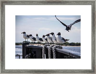 Bringing Up The Rear Framed Print