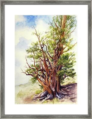Bristle Cone Pine Framed Print