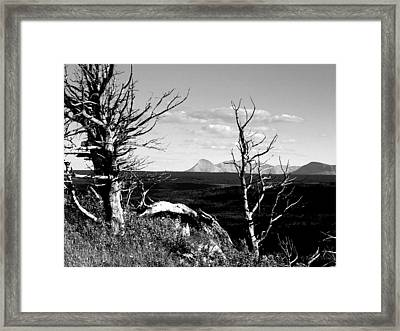 Bristle Cone Pines With Divide Mountain In Black And White Framed Print