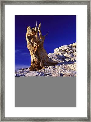 Bristlecone Framed Print by Eric Foltz