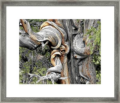 Bristlecone Pine - 'i Am Not Part Of History - History Is Part Of Me' Framed Print by Christine Till