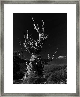 Framed Print featuring the photograph Bristlecone Pine by Art Shimamura