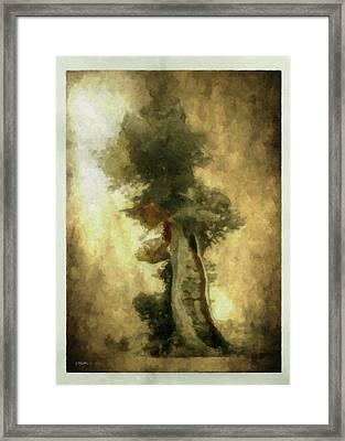 Bristlecone Pine Framed Print