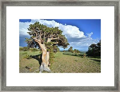 Bristlecone Ridge Framed Print by Ray Mathis