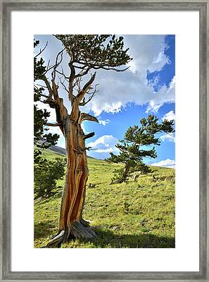 Bristlecone Scenic Area Framed Print by Ray Mathis