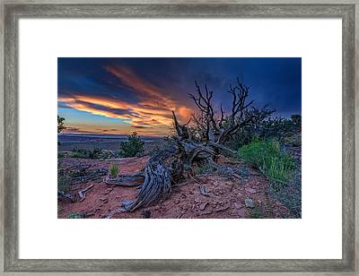 Bristlecone Sunset Framed Print by Rick Berk