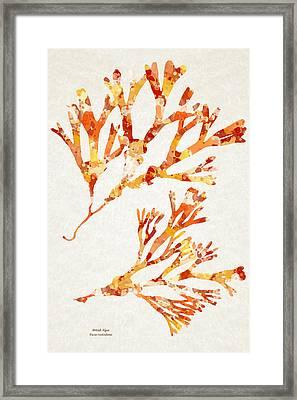 British Algae Abstract Fucus Vesiculosus Framed Print by Christina Rollo