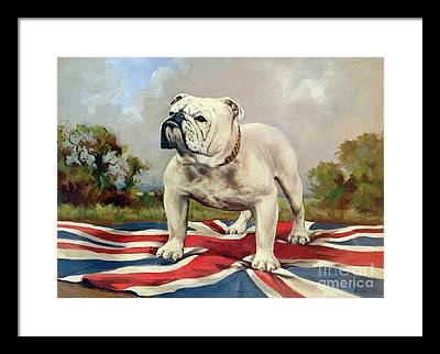 English Bulldog Framed Prints