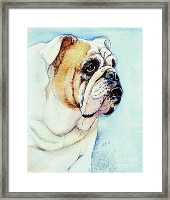 British Bulldog Framed Print