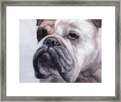 British Bulldog Painting Framed Print