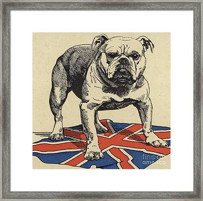 British Bulldog Standing On The Union Jack Flag Framed Print by English School