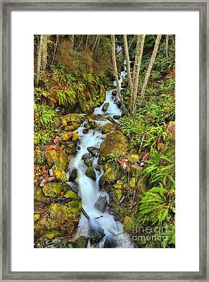 British Columbia Rainforest Falls Framed Print by Adam Jewell