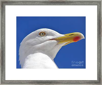 Framed Print featuring the photograph British Herring Gull by Terri Waters