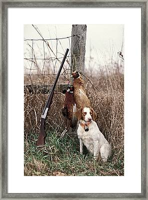 Brittany And Pheasants - Fs000757b Framed Print