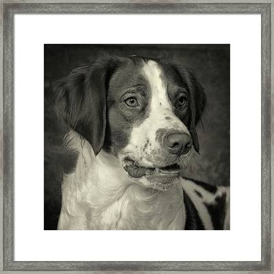 Brittany In Black And White Framed Print
