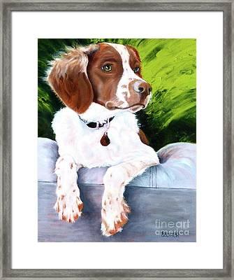 Brittany Spaniel Framed Print