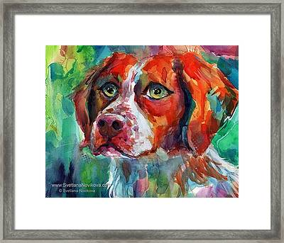 Brittany Spaniel Watercolor Portrait By Framed Print