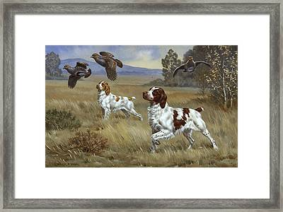 Brittany Spaniels Flush Three Birds Framed Print by Walter A. Weber