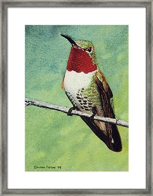 Broad-tailed Hummingbird Framed Print by Sharon Farber