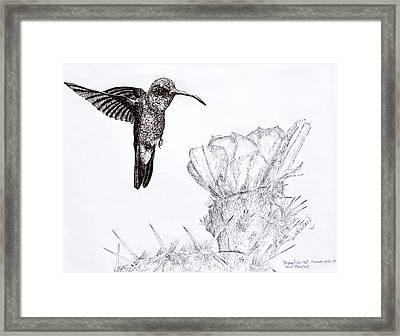 Broadbilled Hummingbird Framed Print