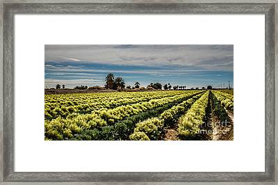 Broccoli Seed Framed Print by Robert Bales
