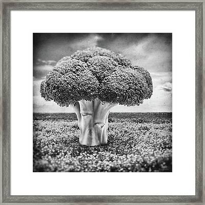 Broccoli Tree Framed Print by Wim Lanclus