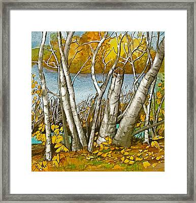 Broken Birch  Framed Print