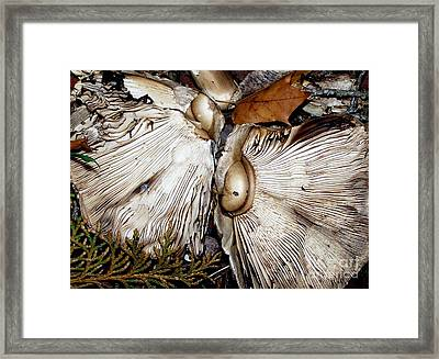 Broken Framed Print by Erica Hanel