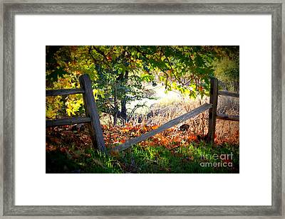 Broken Fence In Sycamore Park Framed Print by Carol Groenen