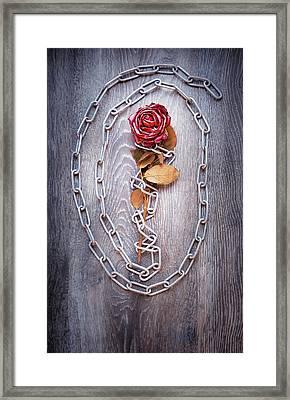 Broken Rose Framed Print