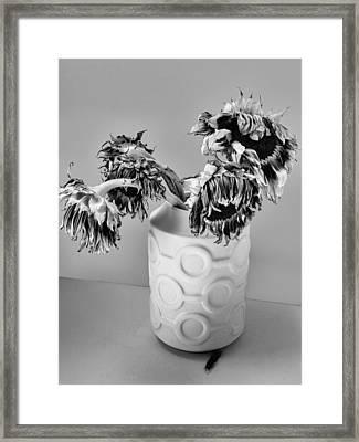 Broken Sunflowers Framed Print by William Dey