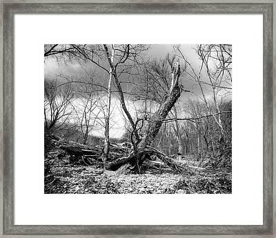 Framed Print featuring the photograph Broken Tree by Alan Raasch
