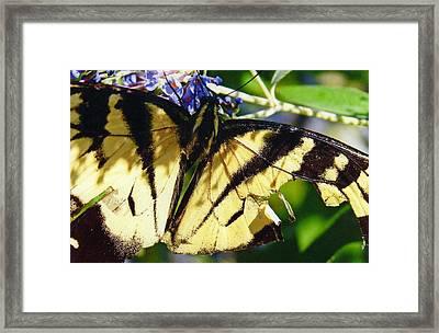 Broken Wing Framed Print by Renee Cain-Rojo