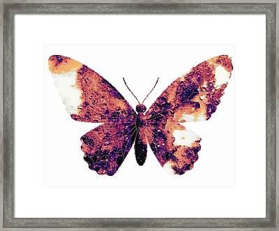 Broken Wings Framed Print