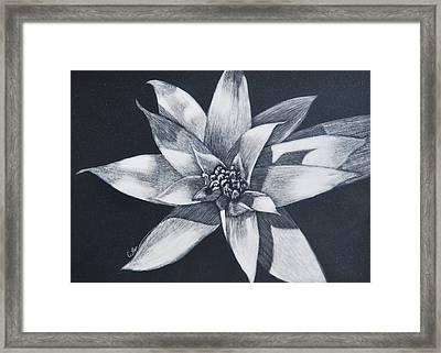 Bromeliad Framed Print by Diane Cutter