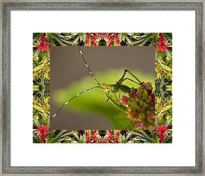 Bromeliad Grasshopper Framed Print by Bell And Todd