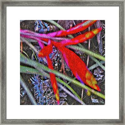 Bromeliad In The Cathedral Framed Print by Gwendalyn Abrams