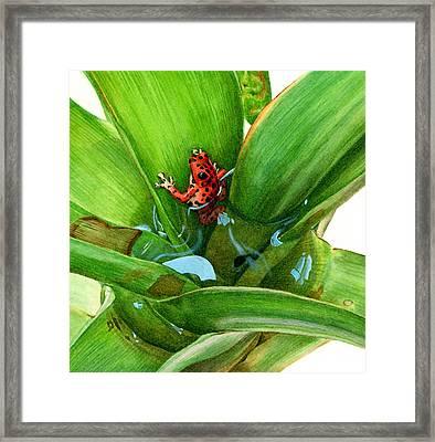 Bromeliad Microhabitat Framed Print