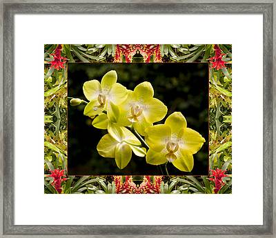 Bromeliad Orchids Framed Print by Bell And Todd
