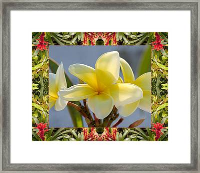 Bromeliad Plumeria Framed Print by Bell And Todd