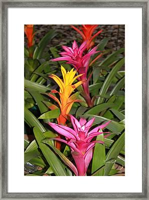 Bromeliad Tree Framed Print