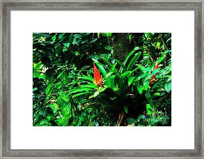 Bromeliads El Yunque  Framed Print by Thomas R Fletcher