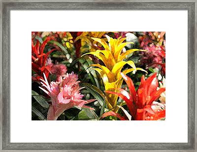 Bromeliads Framed Print by Steven Sparks