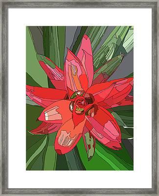 Bromiliad Framed Print by Jamie Downs