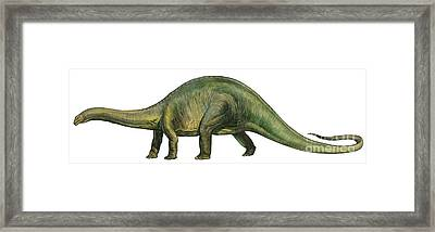 Brontosaurus, A Prehistoric Era Framed Print by Sergey Krasovskiy